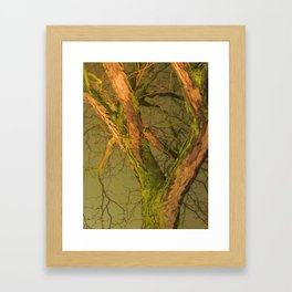 The Shelter Of Many Lives Framed Art Print