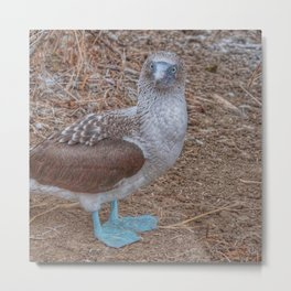 SmartMix Animal- Blue-footed Booby Metal Print