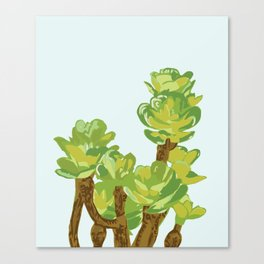 Portylacaria Afra Succulent Blue and Green Canvas Print