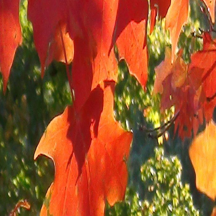 Autumn Fall Foliage Leggings