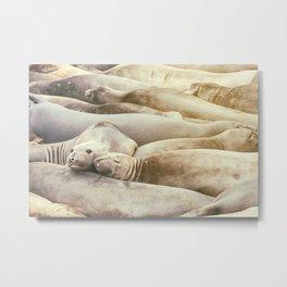 Sleeping Buddies Metal Print