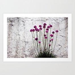 Urban garden. Purple flowers. Art Print