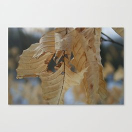 Winter Leaf Canvas Print