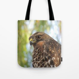 Young Red-Shouldered Hawk in a Desert Willow Tote Bag