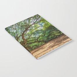 Angel Oak - Ancient Tree on Johns Island South Carolina Notebook