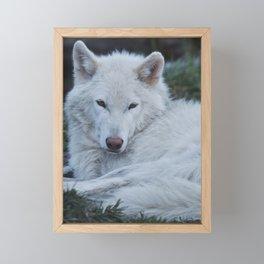 White Wolf Framed Mini Art Print