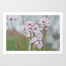Tender Spring Flowers Art Print