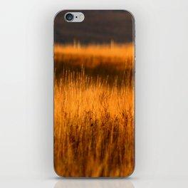 Golden grasses iPhone Skin
