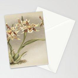 Oncidium jonesianum Oncidium jonesianum haeanthum from Reichenbachia Orchids (1888-1894) illustrated Stationery Cards