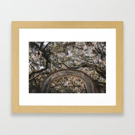 Wormsloe Historic Site - Savannah, Georgia Framed Art Print