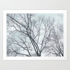 Blue Sky and branches. Art Print