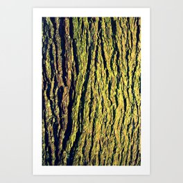 Oak Wrinkles Art Print