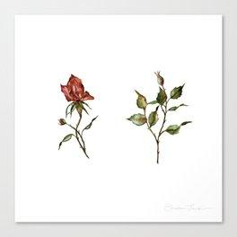 Loose Watercolor Rosebuds Canvas Print
