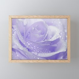 Rose with Drops 085 Framed Mini Art Print