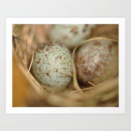 Sparrow eggs macro 2 Art Print