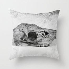 Whitetail Deer Skull (Buck #2) - 8x10 Tintype Photo Throw Pillow