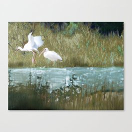 Marsh Birds Canvas Print