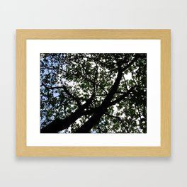Looking up into the Kapok tree Framed Art Print
