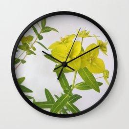 Euphorbia Cornigera Wall Clock