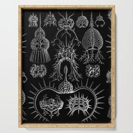 Ernst Haeckel - Spyroidea Serving Tray
