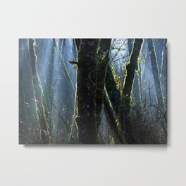 Pixie Forest Metal Print