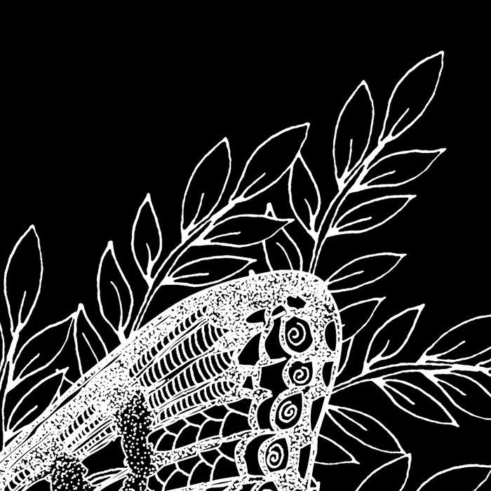 Black and White Butterfly Design Leggings