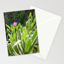 New purple Stationery Cards