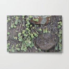 Succulents over Rocks Metal Print