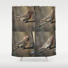 House Finches Dating Shower Curtain