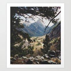 San Juan Forest Art Print
