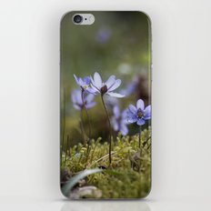 Anemone Hepatica  iPhone & iPod Skin