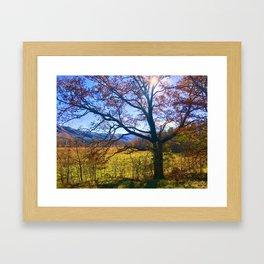 Fall Light Framed Art Print