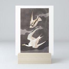 Lesser Tern by John Audubon Mini Art Print
