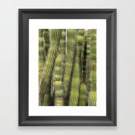 Wall of Cactus Framed Art Print