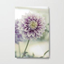 Pink Dahlia Flower Metal Print