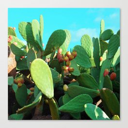 Cactus fruit turquoise Canvas Print