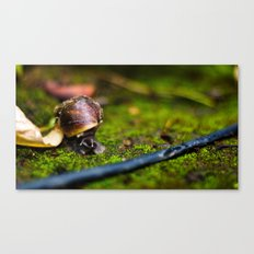 At a Snail's  Pace Canvas Print