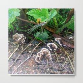 Turkey Tail Fungus Metal Print
