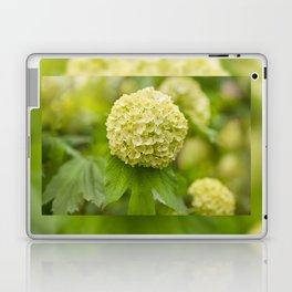 Viburnum opulus Roseum inflorescence Laptop & iPad Skin