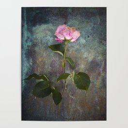 Single Wilted Rose Poster
