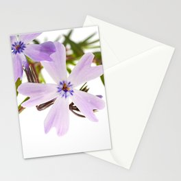 Creeping Phlox (Phlox subulata) - minimalist modern flower photo Stationery Cards