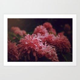 Pink Bellingrath Floral Art Print