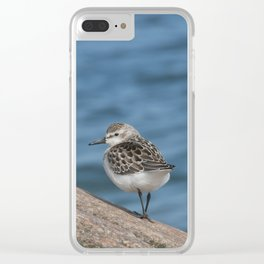 Shorebird Clear iPhone Case
