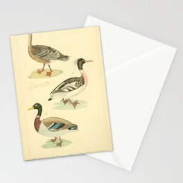 Wild Goose, Red breasted Merganser, Wild Mallard15 Stationery Cards