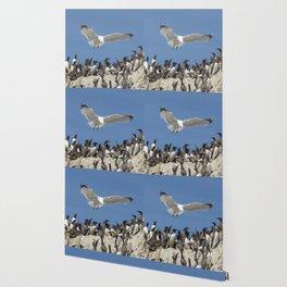 Seagull hovering over birds Wallpaper