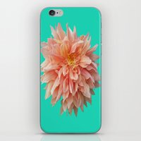 jewish iPhone & iPod Skins featuring Flower Petals by Brown Eyed Lady