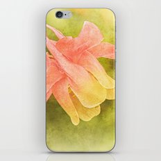 Soft Aquilegia iPhone & iPod Skin