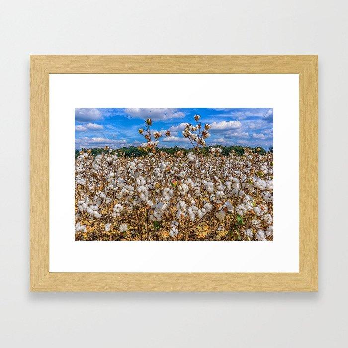 Sea of Cotton Framed Art Print