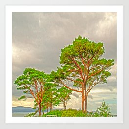 Magestic old Trees Art Print
