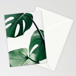 Plant, Green, Monstera, Leaf, Minimal, Trendy decor, Interior, Wall art, Photo Stationery Cards